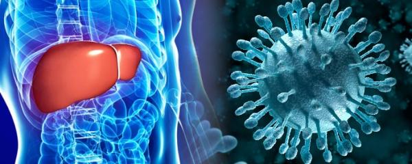 我檢查後被告知帶有B型肝炎病毒,但肝功能正常,為什麼?